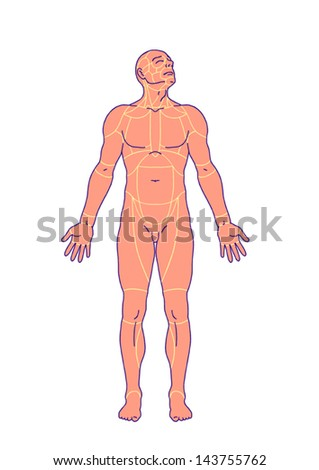 drawing, medical, didactic board of general anatomy of anatomy surface of the human body, landmarks and reference lines, body region, regional anatomy, anterior view - stock vector