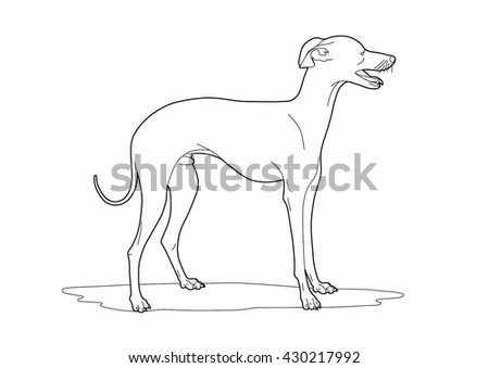 Drawing of a cute dog