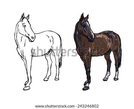 Drawing of elegance horse on white background