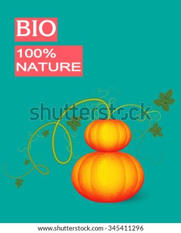Drawing of fresh pumpkin.Vector vegetable illustration. - stock vector