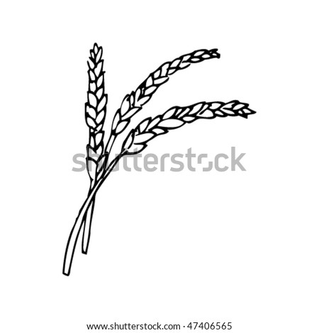 drawing of wheat of corn - stock vector