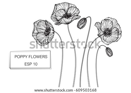 Drawing poppy flowers vector collection set stock vector 609503168 drawing poppy flowers vector collection set of poppies flower by hand drawing on white backgrounds mightylinksfo