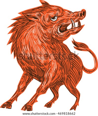 Drawing sketch style illustration of an angry wild pig boar razorback ready to attack looking to the side viewed from front set on isolated white background.