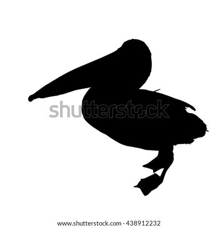 Drawing vector isolated American white pelican - pelecanus erythrorhynchos silhouette - stock vector