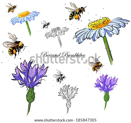 Drawings Bee And Bumblebee Pollinating Flowers Version With A Black Stroke Color