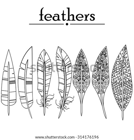drawn vector feathers