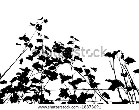 Dried vineyard.See similar pictures in my portfolio. - stock vector