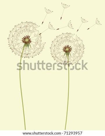 Dry dandelion flowers - vector illustration - stock vector