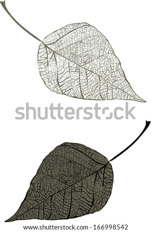 Dry leaves  - stock vector