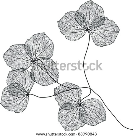 Dried Plant Stock Images Royalty Free Images Amp Vectors