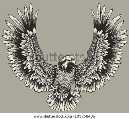 Eagle - stock vector