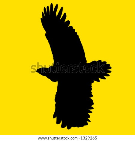 eagle flying - stock vector