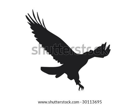 Eagle in flight - stock vector