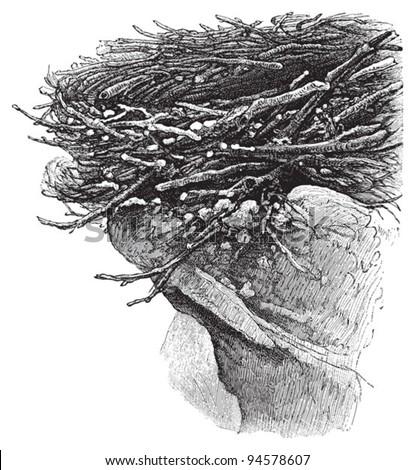 Eagle nest - Vintage illustration / illustration from Meyers Konversations-Lexikon 1897 - stock vector