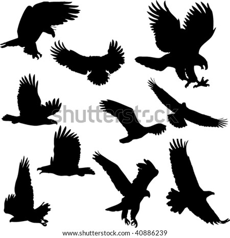 Eagle vector collection set - stock vector
