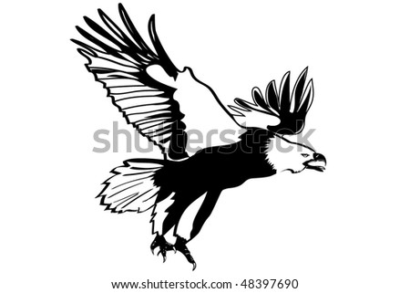 Eagle, very detailed illustration