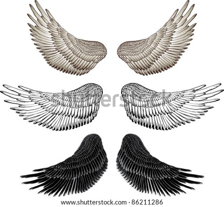 Eagle wings - vector drawing - stock vector