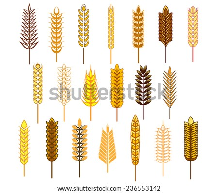 Ears of cereals and grains icons set depicting wheat, rye, barley and oats isolated on white background - stock vector