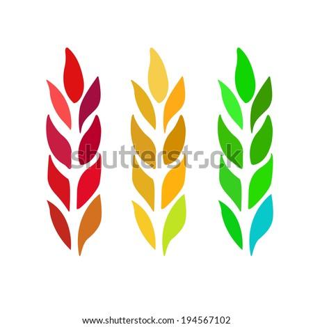 Ears of Wheat, Barley or Rye. Vector illustration. - stock vector