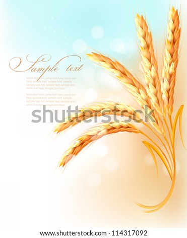 Ears of wheat in front of blue sky. Vector illustration. - stock vector