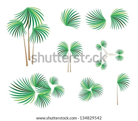 Coconut leaves Stock Photos, Illustrations, and Vector Art