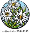 Edelweiss.  There are delicate edelweiss in the mountains. - stock vector
