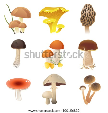 edible mushrooms icons set. EPS 10. File contains transparencies!