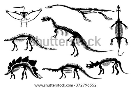 Editable vector silhouettes of the skeletons of a dinosaurs and fossils - stock vector