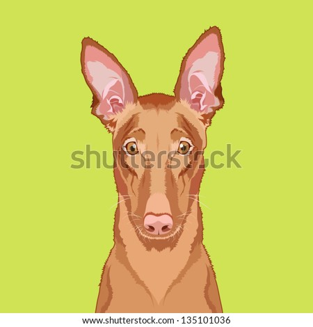 Egyptian pharaoh hound, The buddy dog - stock vector