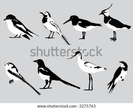 Eight European birds in black & white vector. - stock vector