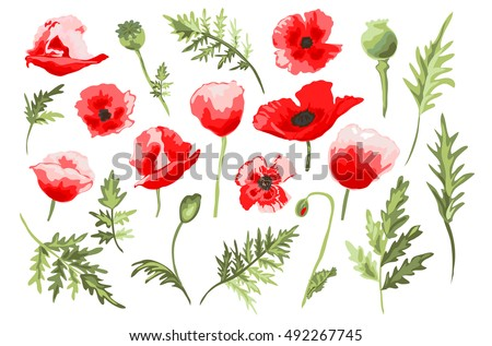 Elegant decorative vector poppy flowers leaves stock vector elegant decorative vector poppy flowers and leaves in watercolor style design element floral decoration mightylinksfo