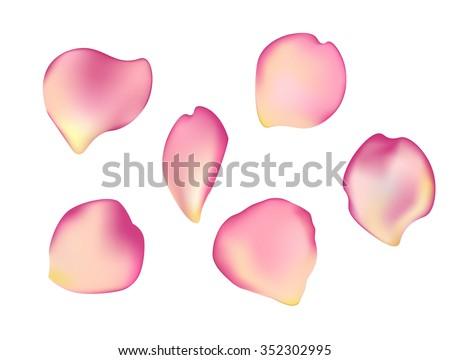 Elegant Set Beautiful Rose Petals Can Stock Vector Hd Royalty Free
