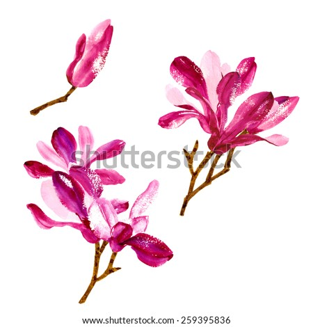 Element for you design - collection of red watercolor magnolia flowers - stock vector