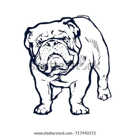 English Bulldog Animal Dog Portrait Hand Drawn Ink Sketch Stock Vector Illustration Outline On White Background