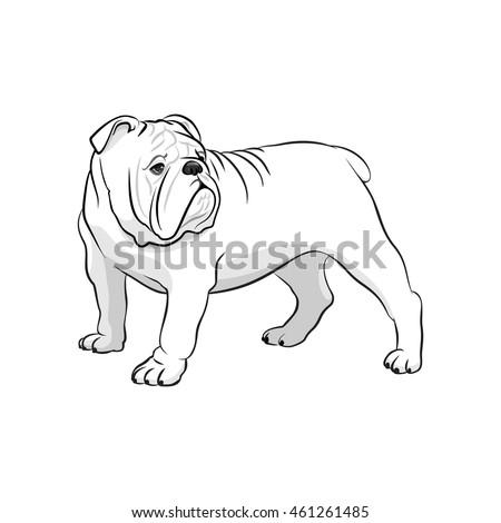 english bulldog french bulldog dog on stock vector 461261485