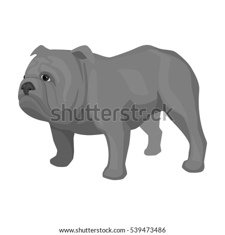 English bulldog icon in monochrome style isolated on white background. England country symbol stock vector illustration.