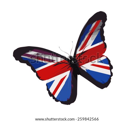 English flag butterfly flying, isolated on white background - stock vector