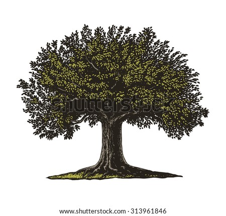 Engraved tree.  Vector illustration of a fruit tree in vintage engraving style. Isolated, grouped.  - stock vector