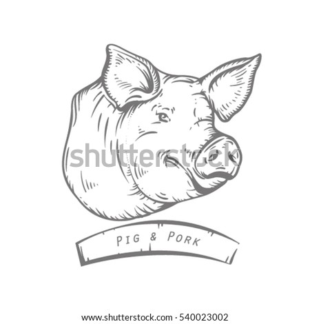 pig stock images  royalty