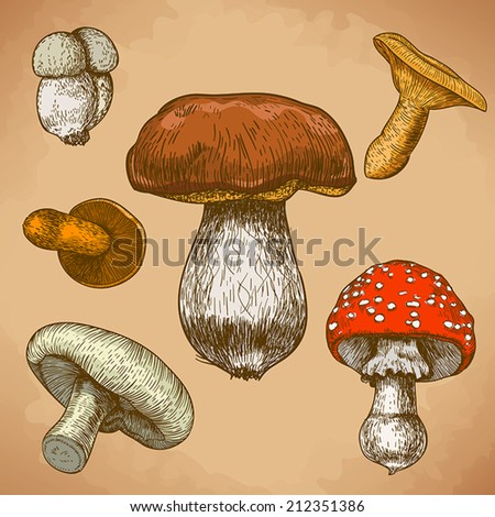 engraving vector illustration of mushrooms in retro style - stock vector