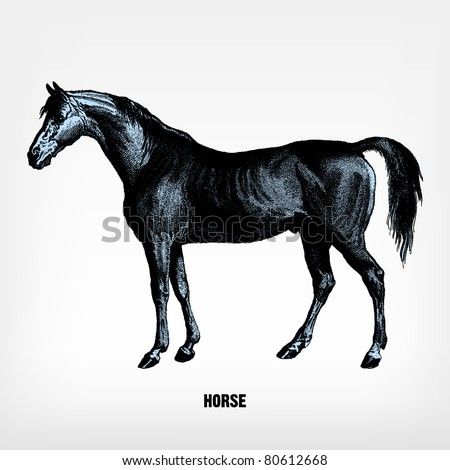 """Engraving vintage horse from """"The Complete encyclopedia of illustrations"""" containing the original illustrations of The iconographic encyclopedia of science, literature and art, 1851. Vector. - stock vector"""