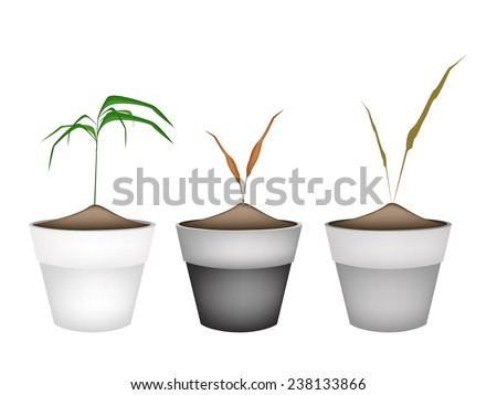 Environmental Concept, Illustration of Grass, Reed or Wild Plants in Terracotta Flower Pots for Garden Decoration.