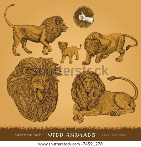EPS10,  Hand-drawn wild animals vector set: lions, a lioness and lion cub (for decoration and design) - stock vector