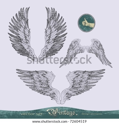 EPS10,  wings vector set for decoration and design - stock vector