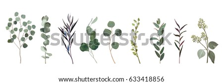 Eucalyptus, agonis seeded designer art different foliage natural branches leaves tropical elements in watercolor style set, collection. Vector decorative beautiful cute elegant illustration for design