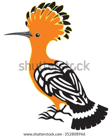 eurasian hoopoe or common hoopoe isolated on white