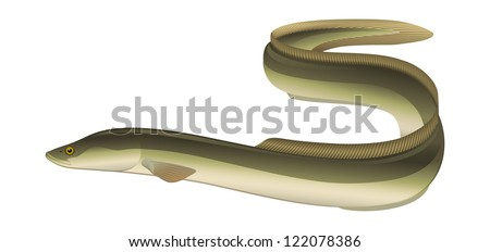 "European Eel (Anguilla anguilla) Salt/Freshwater Fish. ""Full compatible Vector. Created with CMYK gradients."" - stock vector"
