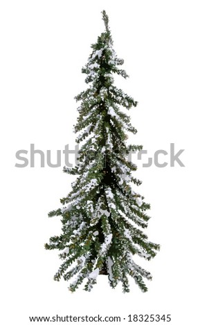 Evergreen tree ready for decoration or your landscape needs. Isolated. VECTOR - stock vector