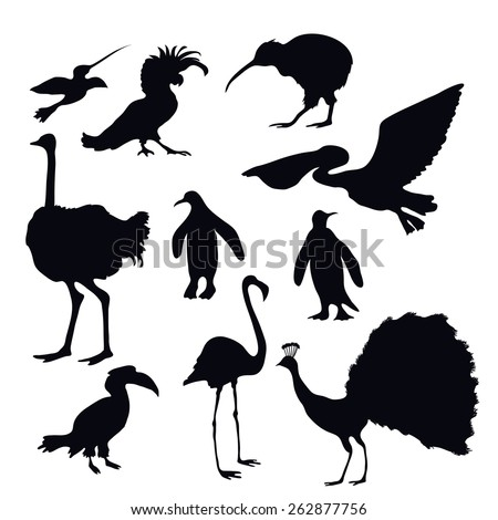 Exotic birds silhouettes decorative icons set with flamingo peacock penguin isolated vector illustration - stock vector