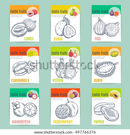 Exotic fruits poster. Vector pencil sketch icons of lychee, guava, figs, carambola, dragon fruit, pitaya, durian, mangosteen passion fruit papaya